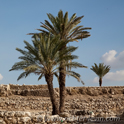 Afeq and Megiddo Field Trip
